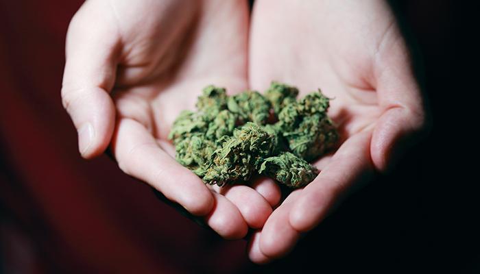 Man holding marijuana in his hands